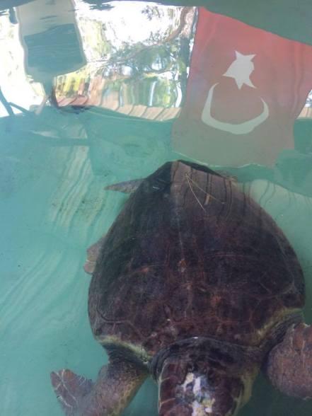 Turtles in Kaptan June's Hut..